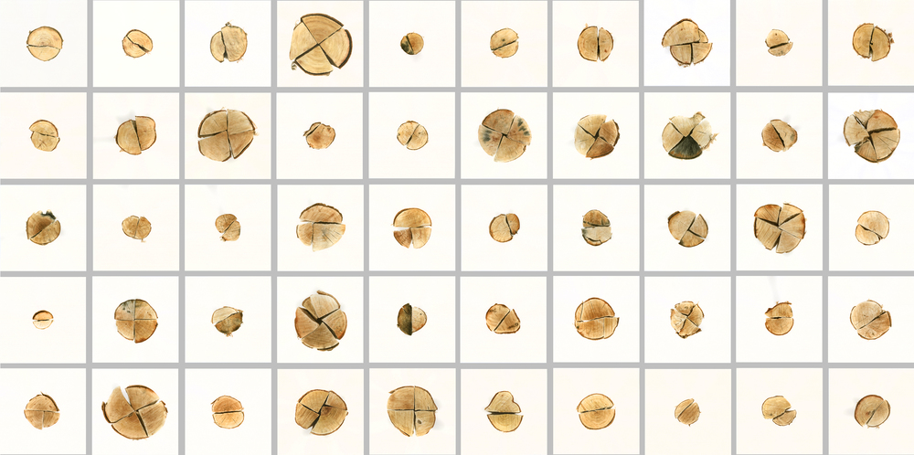 "Andrea Sherrill Evans,  Firewood #1-50 , watercolor on paper, 10.25"" x 10.25"" each, 2013-15."