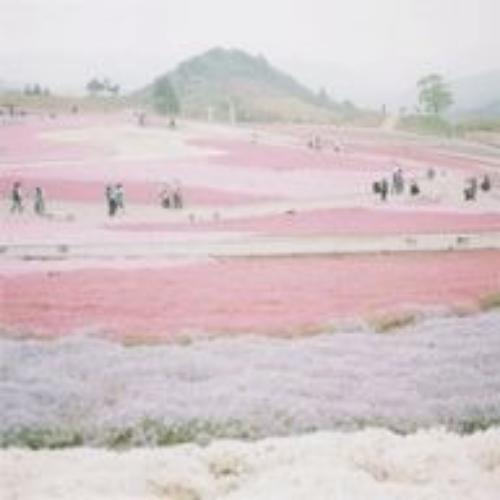 pale hydrangea  http://ift.tt/1njcNKh