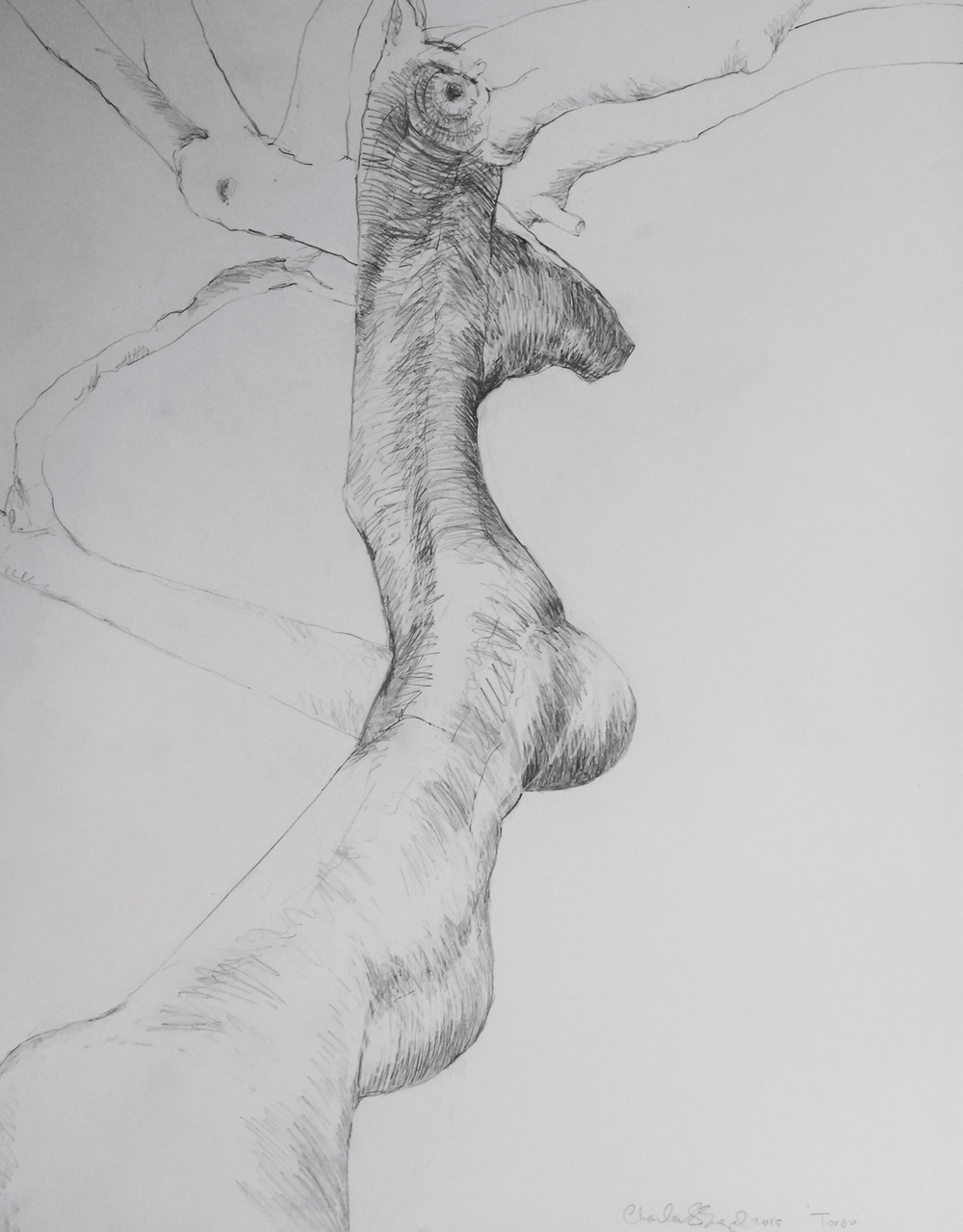 """Paloverde Torso""  Graphite on Paper 18X24"