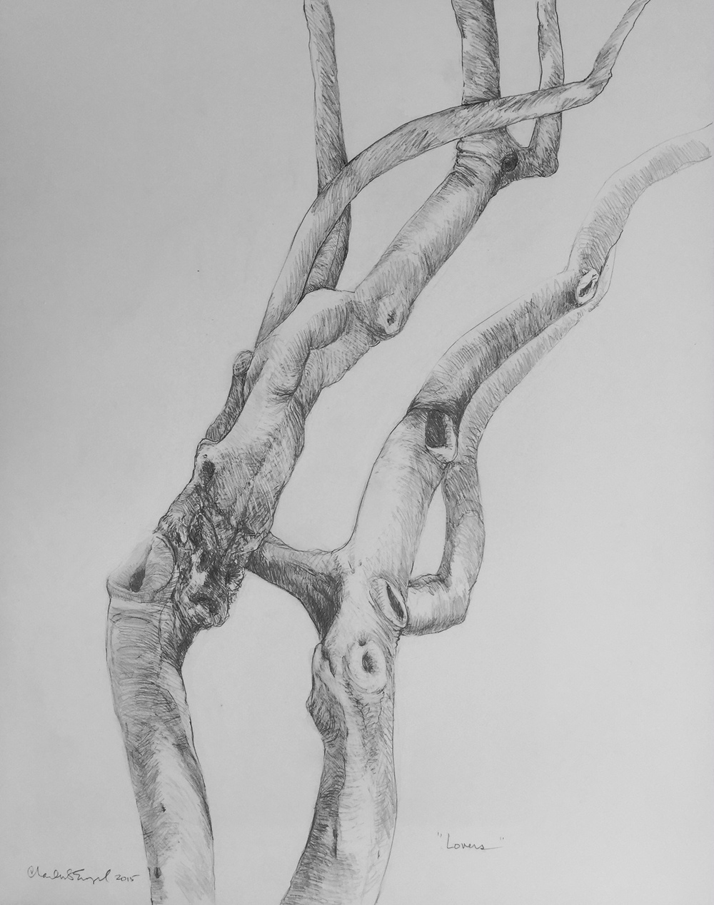 """Paloverde Lovers""  Graphite on Paper"