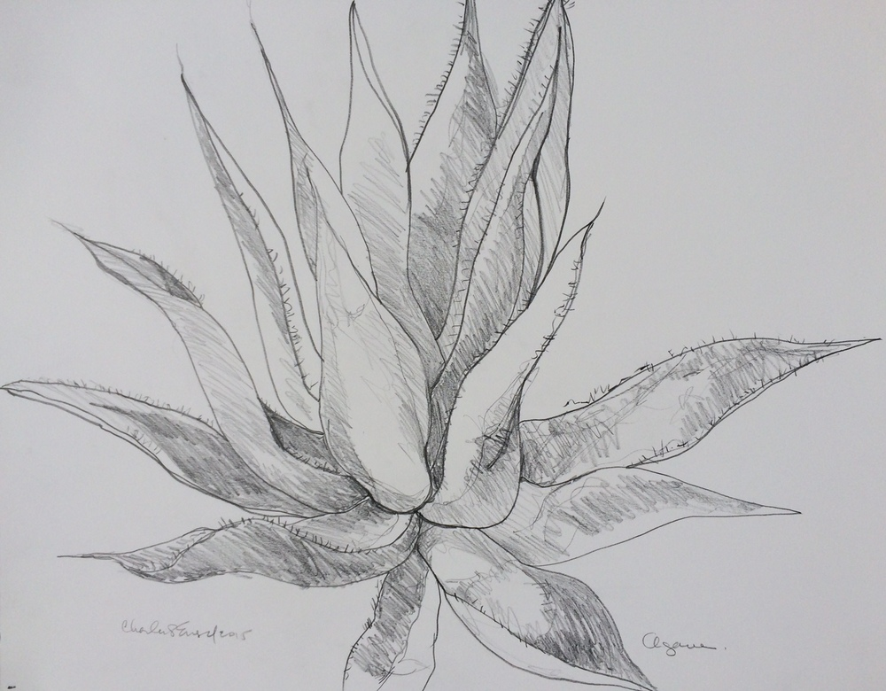 """Agave""  Graphite on Paper"