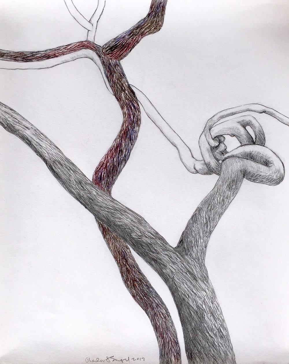 """""""Square Dance""""  Graphite and Watercolor Pencil  21"""" x 25"""""""