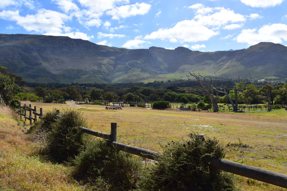 Horse showground in noordhoek, at the turn-off to the beach. looking towards cape point vineyards on the right (white building)