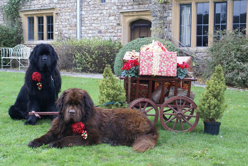 dogs christmas.jpg