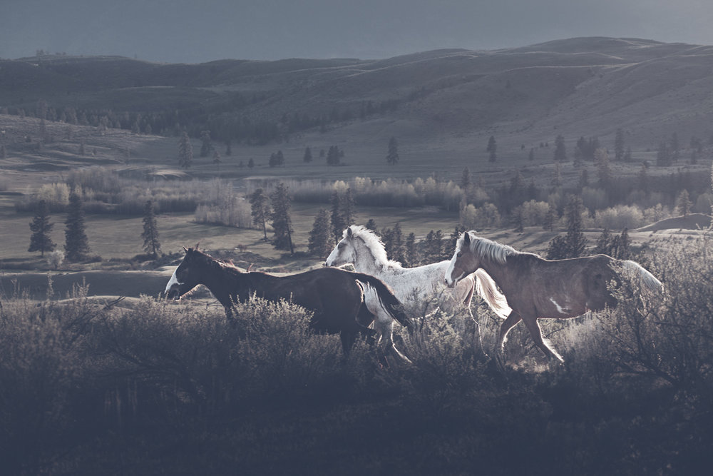 Horses, Osoyoos, B.C. Photo: Troy Moth