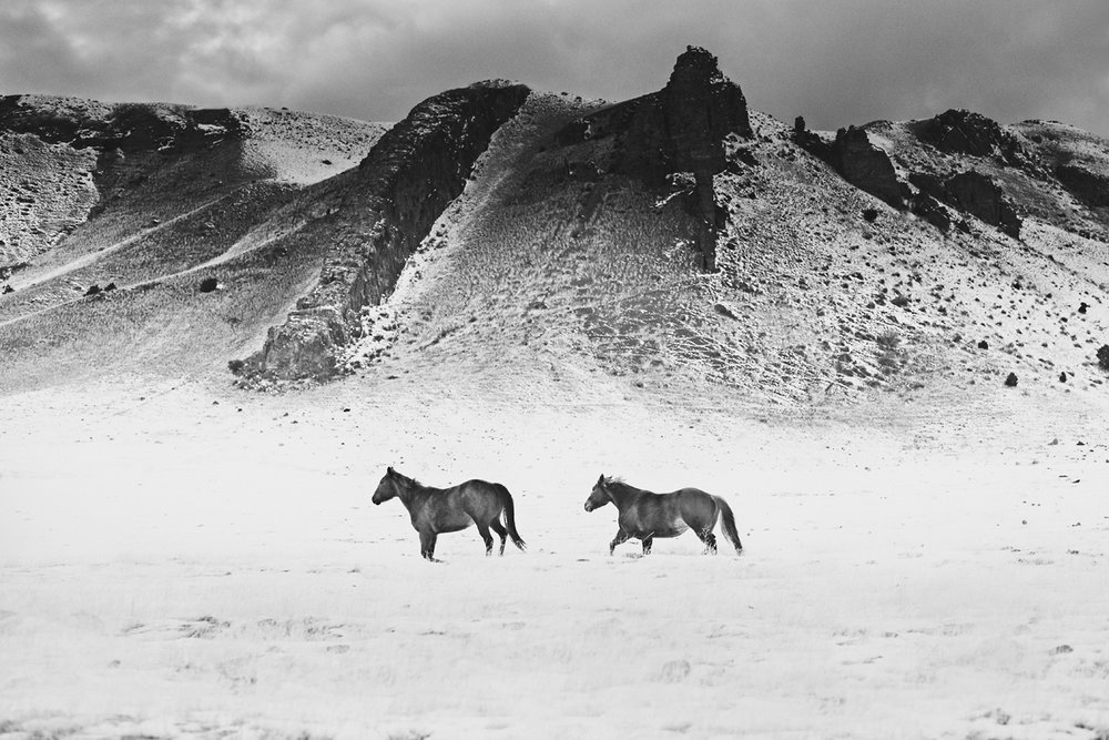 Horses, Montana. Photo: Troy Moth