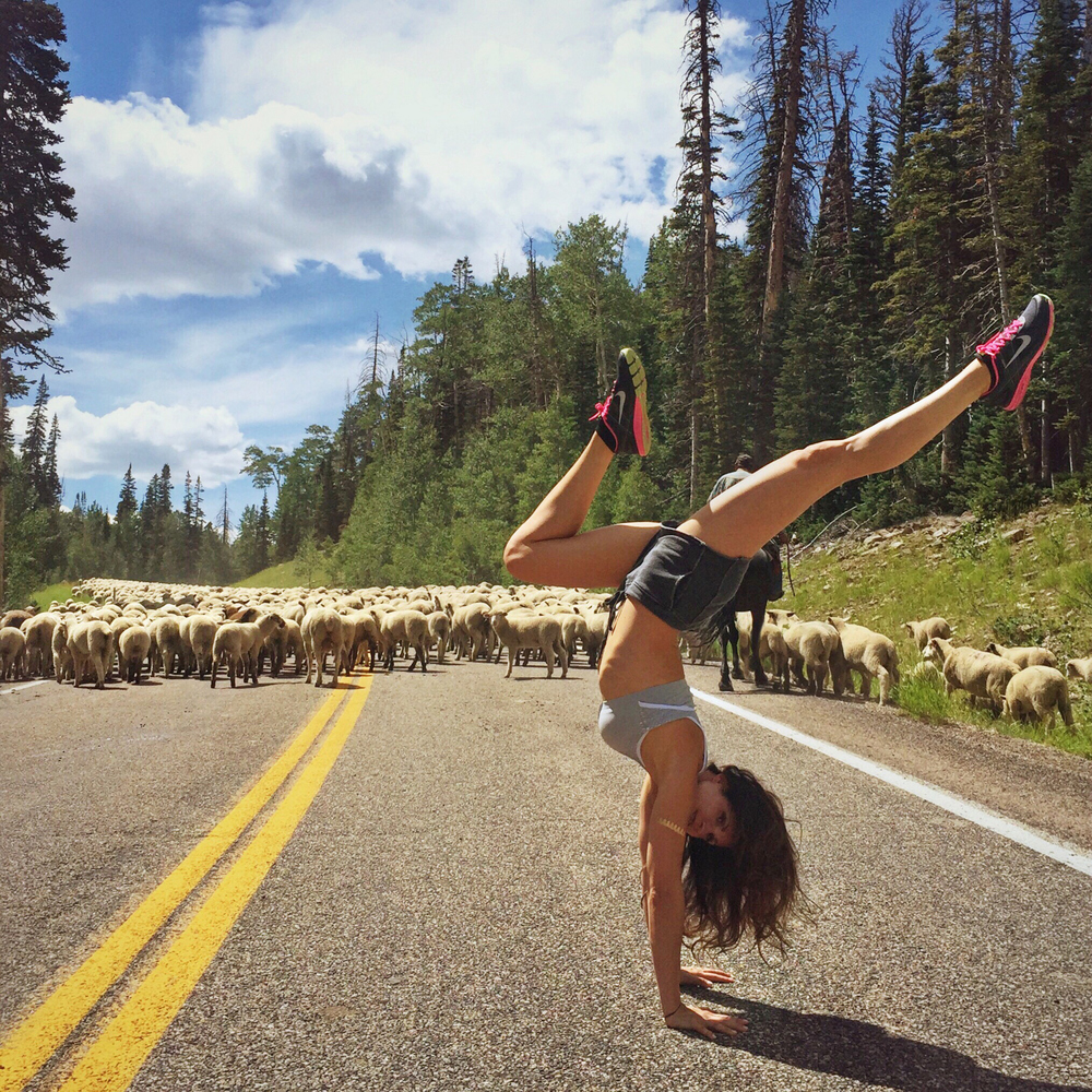 Getting photo-bombed by a flock of sheep in Utah