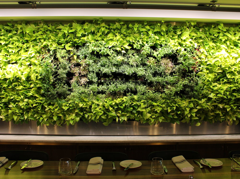 Live Herb Wall at Maggie Oakes Restaraunt