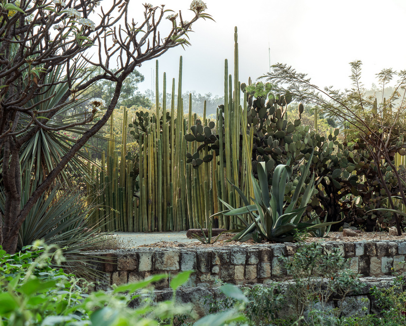 Ethnobotanical Garden in Oaxaca City