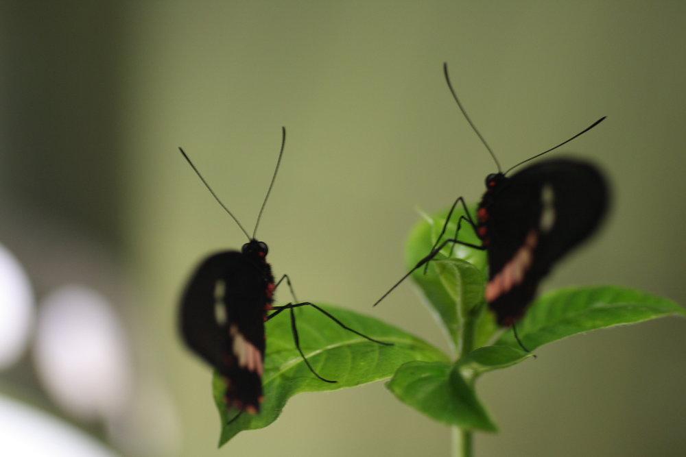 200702_2_amnh_butterfly_5_1881648228_o.jpg