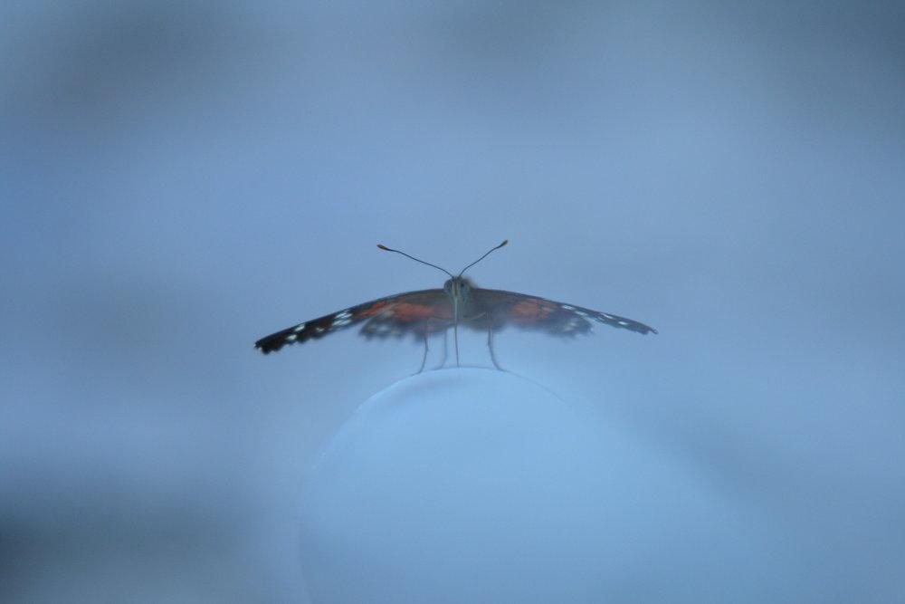20070223_houstonbutterflies_1_1881563952_o.jpg