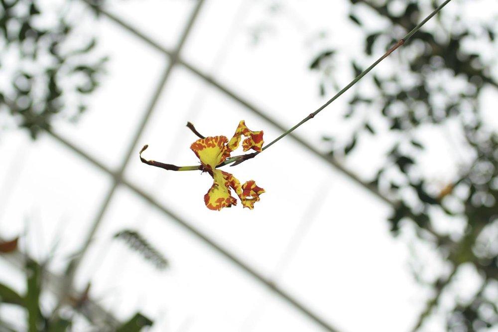 botanical-orchids4_2352181714_o.jpg