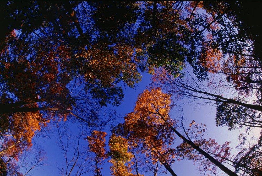 canopy-fire-2_2964056929_o.jpg
