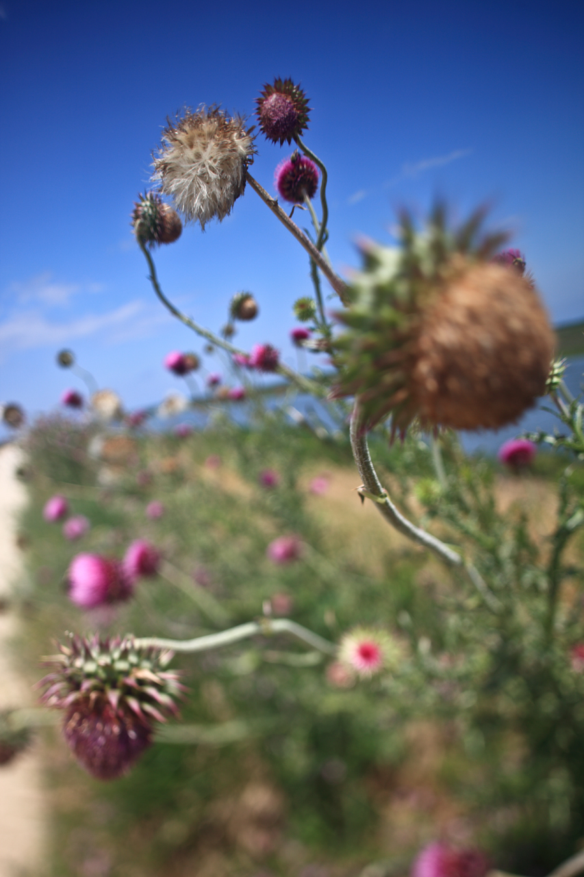 edwin-b-forsythe-wildlife-thistles_3723593096_o.jpg