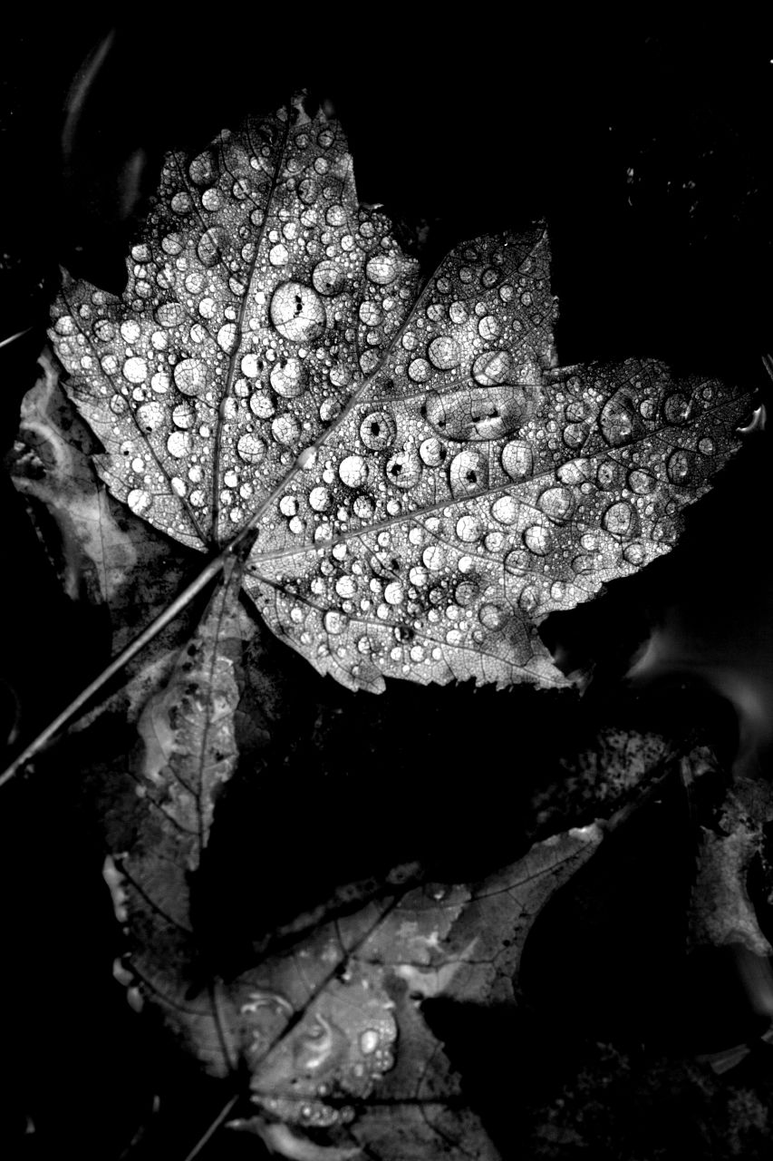 kaaterskill-leaves-bw_2242265595_o.jpg