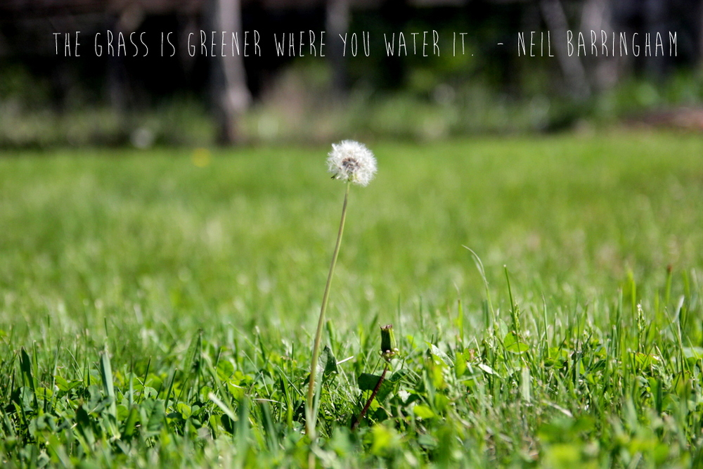 grass is greener quote.JPG