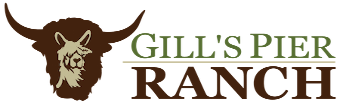 Gill's Pier Ranch - Superior Tibetan Yak for your farm or table