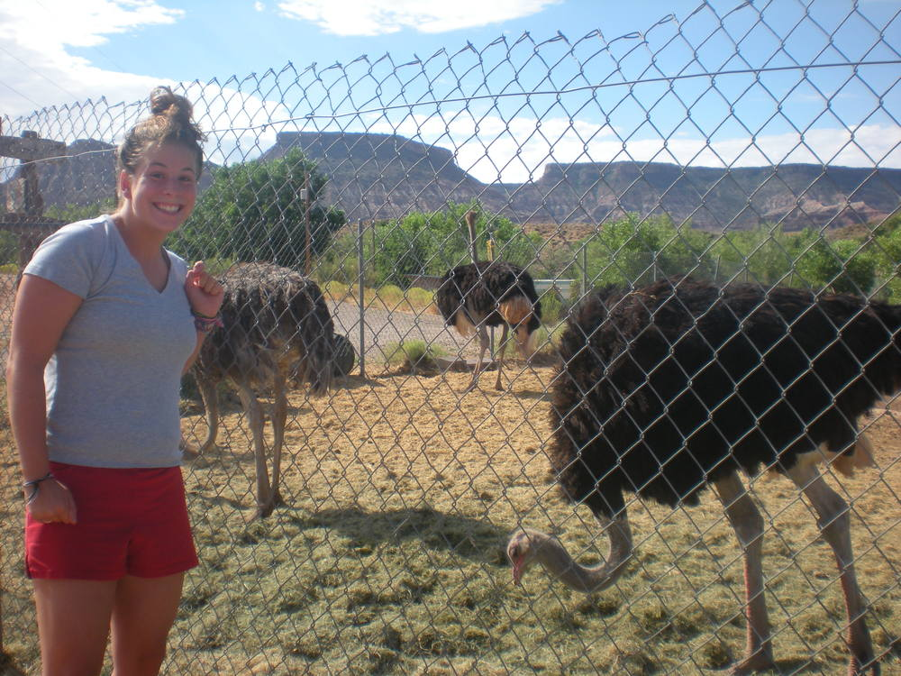 Fun Fact: I'm also an avid ostrich enthusiast.