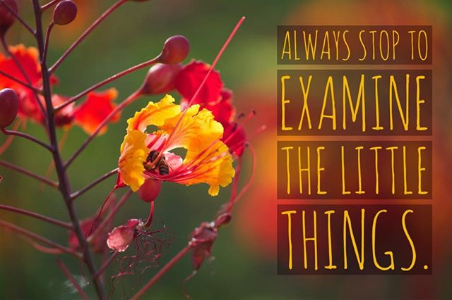 Always stop to examine the #littlethings.