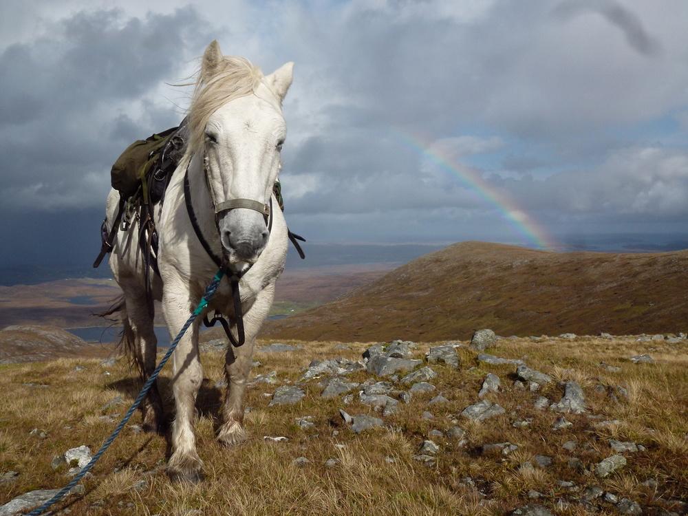 horse rainbow2012-2 170.JPG