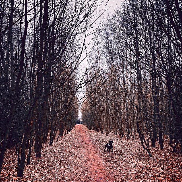 🍁 - - #nature #winter #dog #dogsofinstagram #puppy #photography #cute #christmas #sky #london #londonlife #sunrise #vsco #vscocam