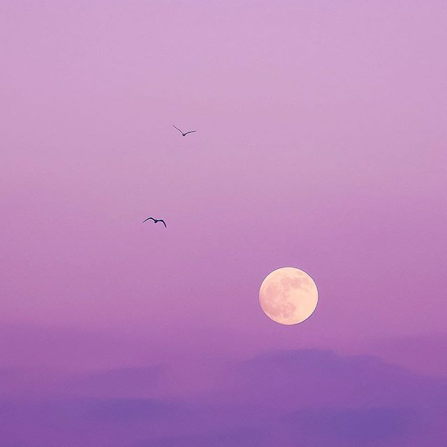 🌕 - - Maybe my Instagram needs to be more colourful, or maybe I'll go straight back to blacks and reds after this ... who knows - - #moon #sunset #nature #landscape #beautiful #lunar #eclipse #sunrise #photography #london #londonlife #colour #bird #art #design #vsco #vscocam