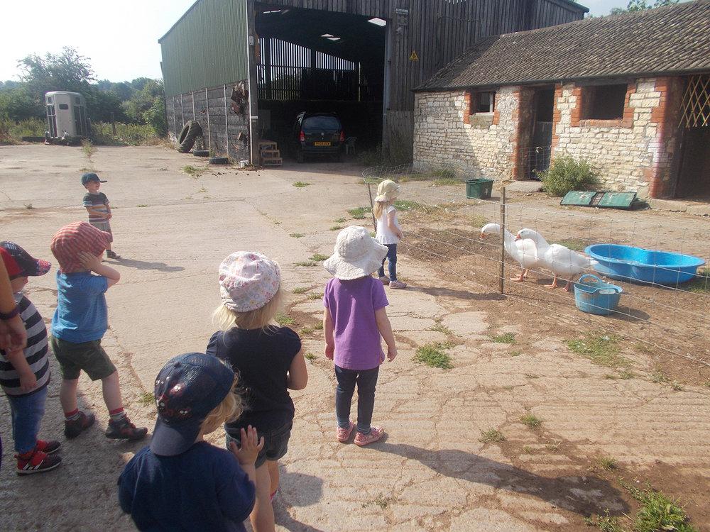 The Farms Life