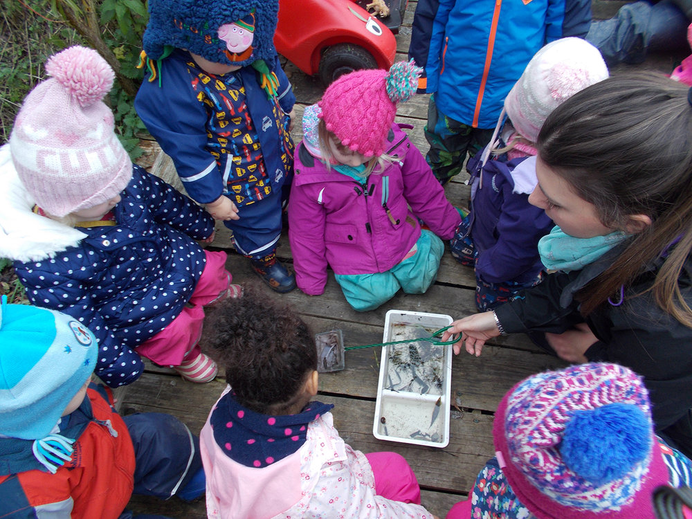Pond Dipping in the Burrow