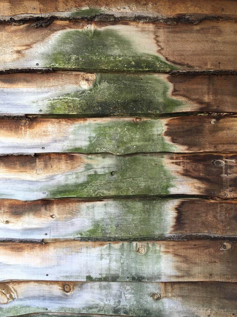 color-texture-wood-design-x-five
