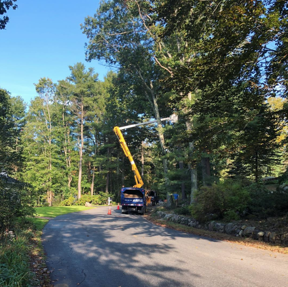 bucket truck tree work