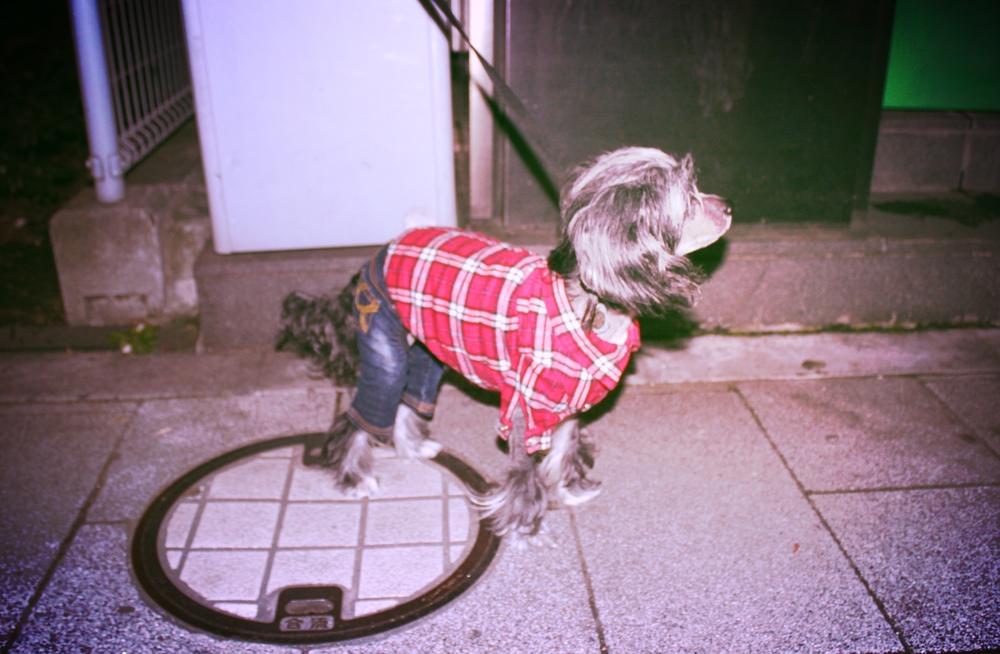 Tokyo fashion dog