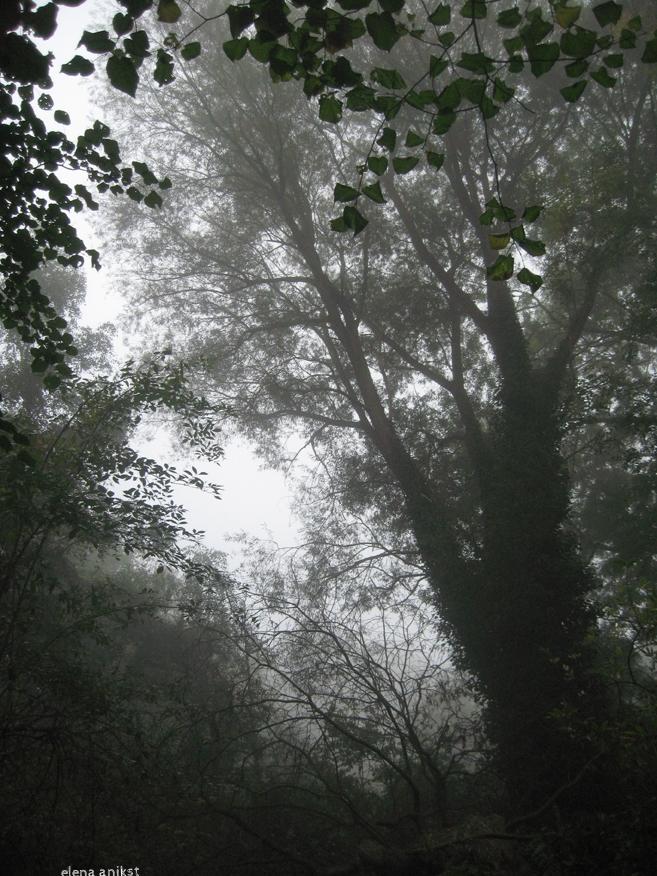 Hampstead Heath 2012