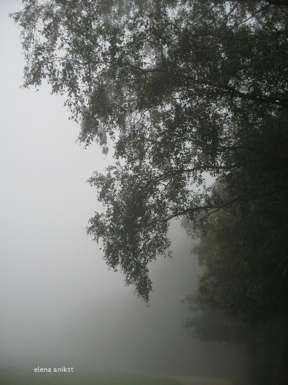 Hampstead Heath 2008