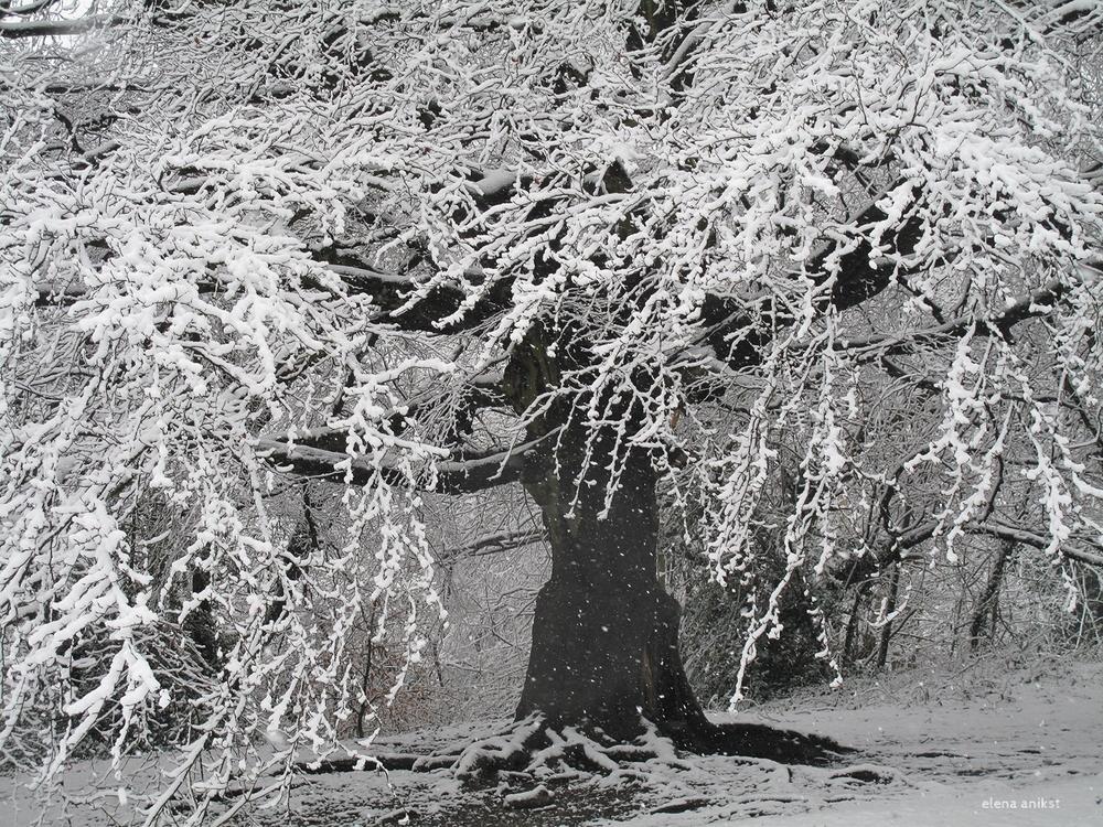Winter in Hampstead Heath 2013