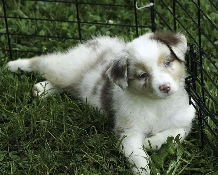 puppies4-8459.jpg