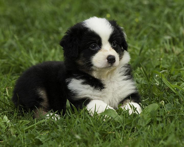 black pup.jpg