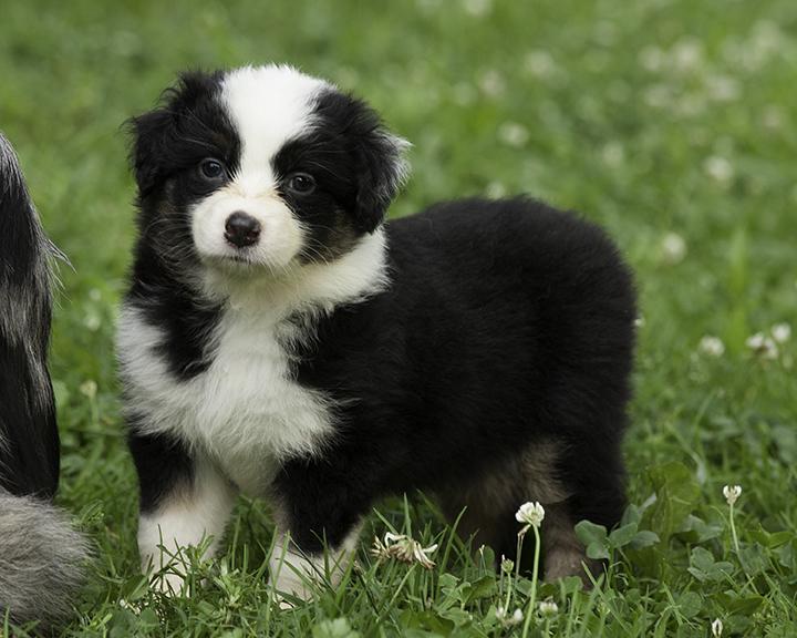 puppies 3-6018sm.jpg