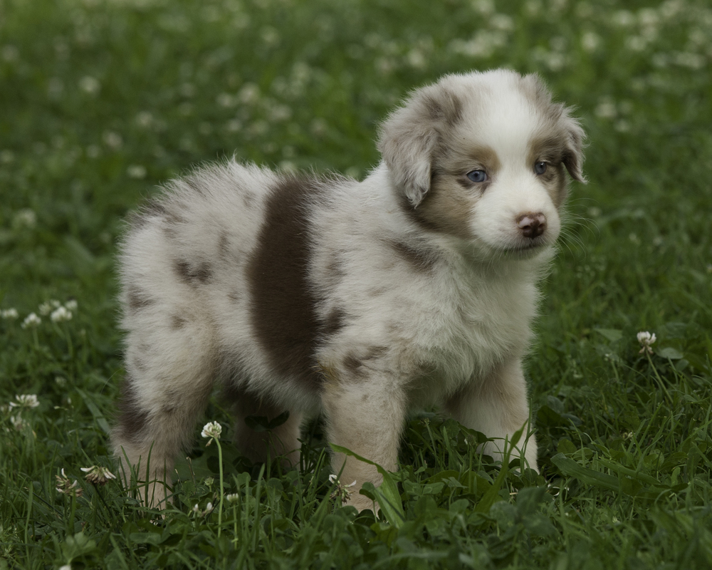puppies 3-6029.jpg