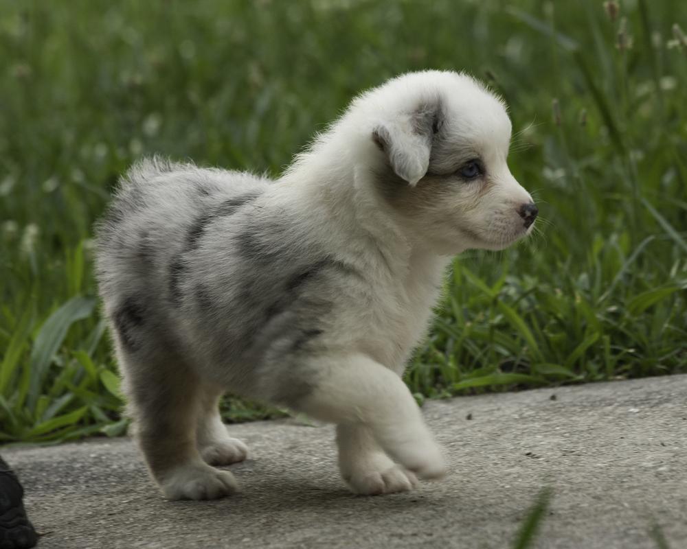 puppies 3-6136.jpg