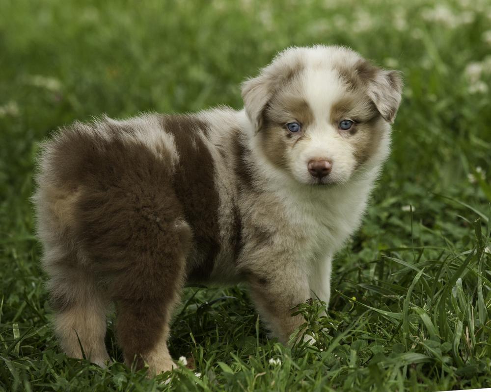 puppies 3-6000.jpg