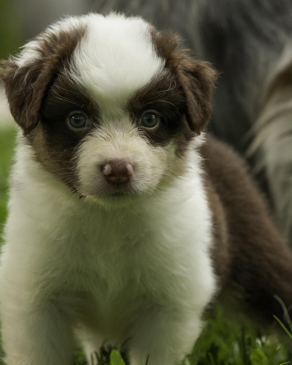 puppies 3-5980.jpg