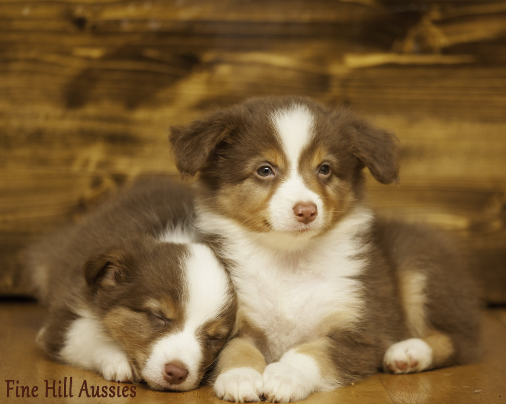 cher-pup1-4980.jpg