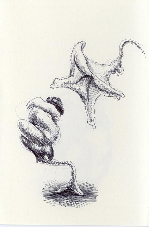 Sketch239_.jpg