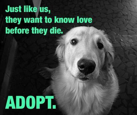 PLEASE ADOPT at your local shelter. — PET RESCUE SOLUTIONS