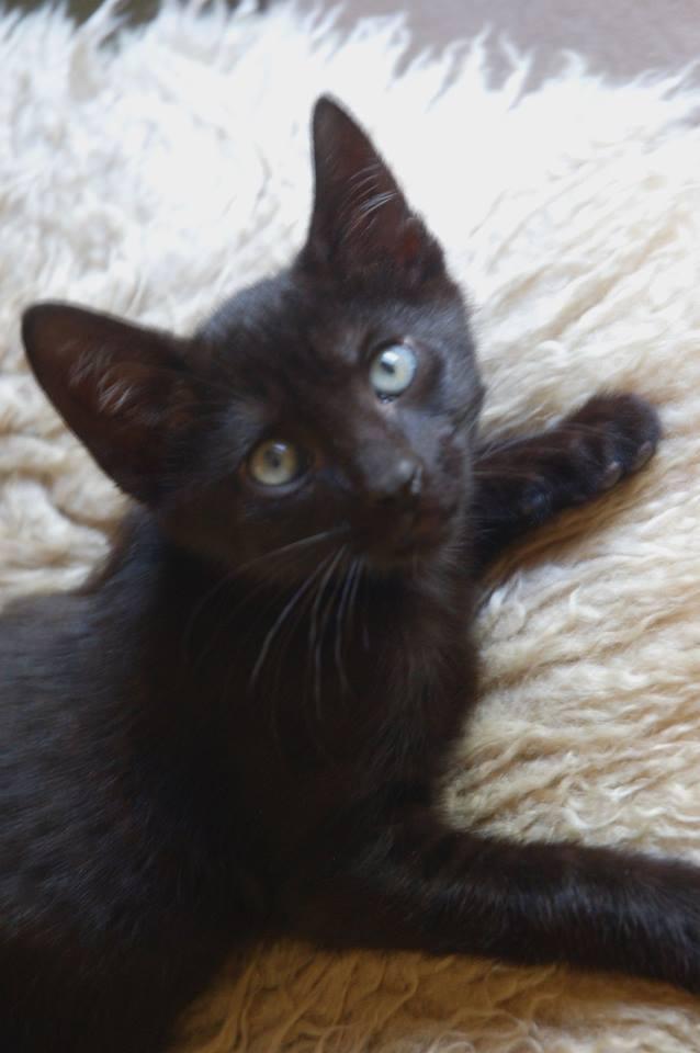 Blackcat2.jpg