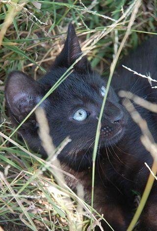 blackcat3.jpg