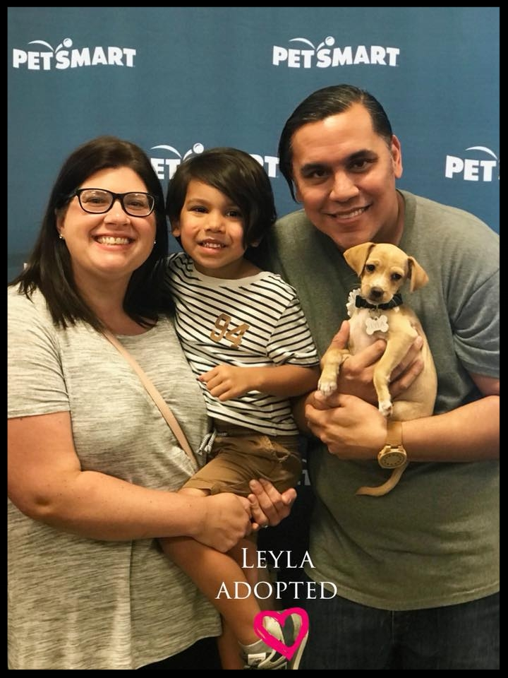 leyla adoption.jpg