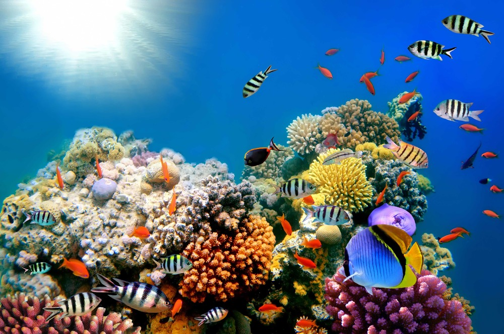 tropical-coral-reef.jpg