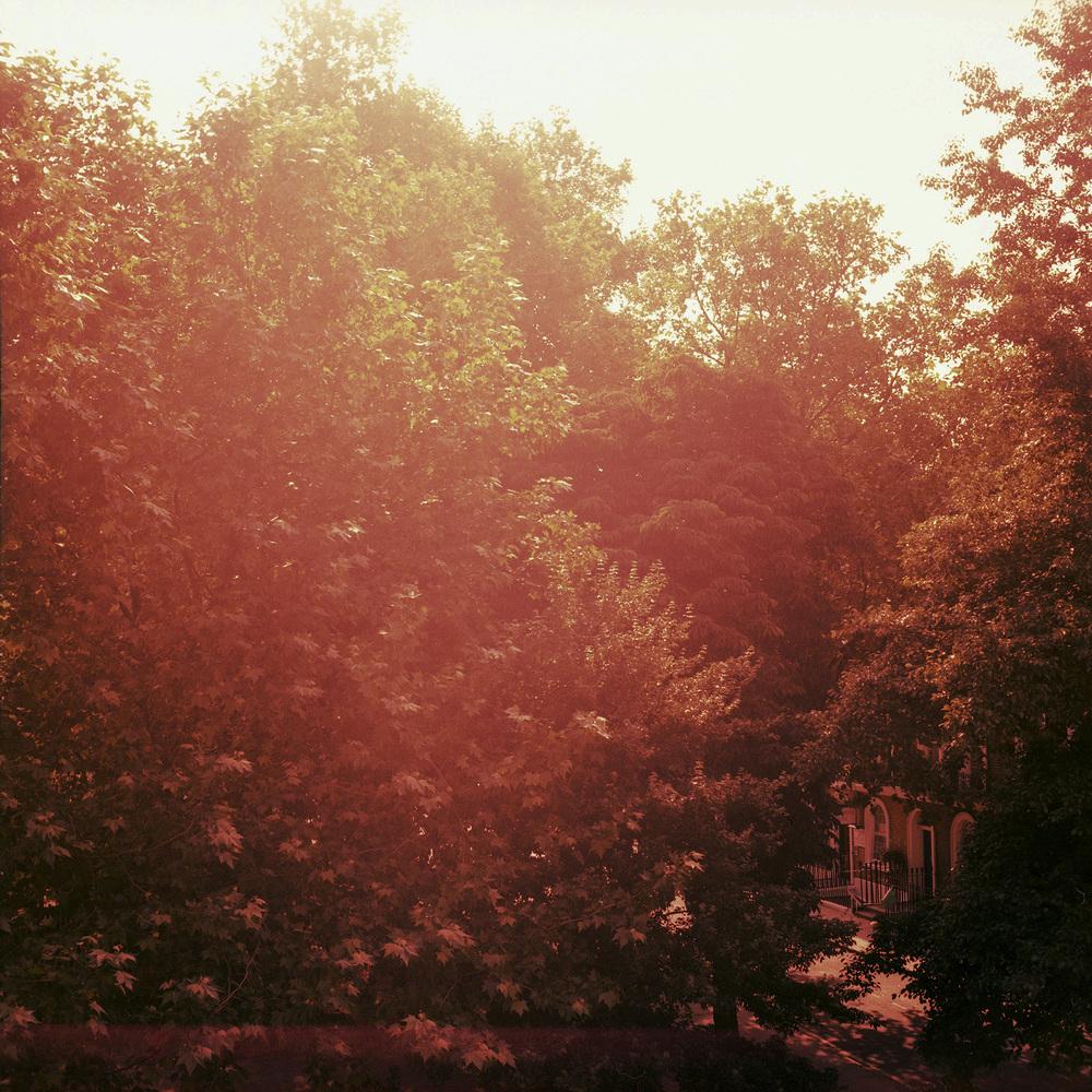tree2web.jpg