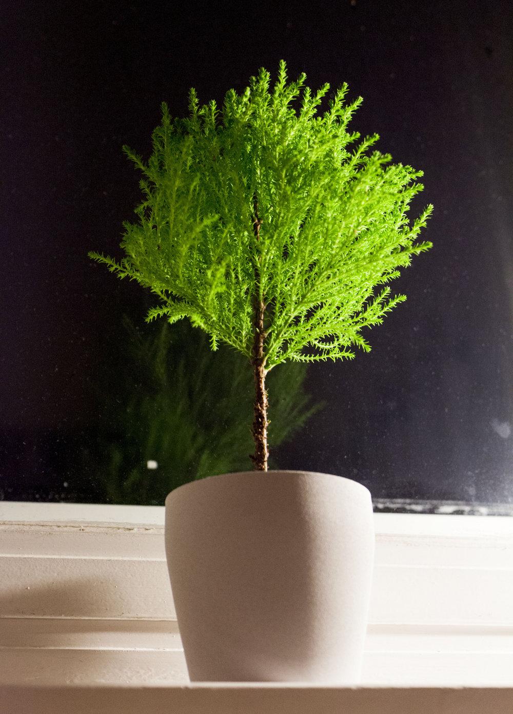 Little Tree [digital]